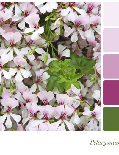 Decorating Trend Pastel Colors